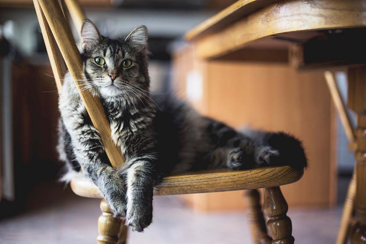 Fur Babies, First Steps, and Freedom: What My Cat Taught Me About Fighting For Life