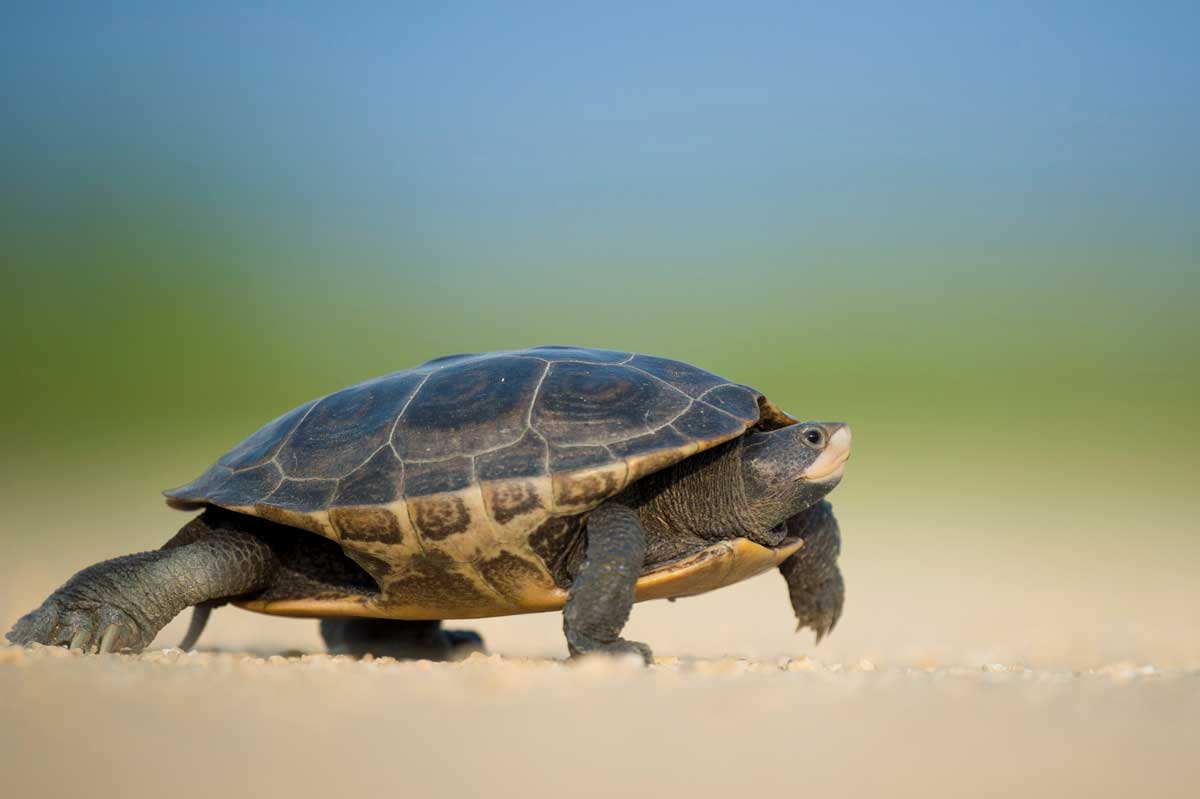 Slow & Steady Wins The Race: Why a Fast Recovery Didn't Work For Me